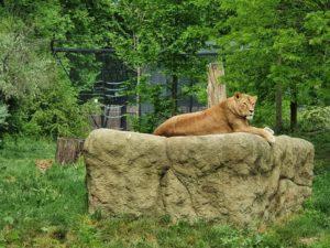 Zoološki vrt Grada Zagreba ponovno je otvoren